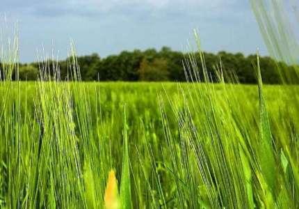 Uskoro prvi krug licitacije državnog poljoprivrednog zemljišta na teritoriji Pančeva