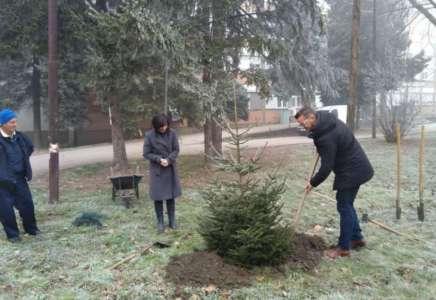 Ispred porodilišta u Pančevu zasađeno drvo u čast prvorođene bebe u 2020. godini