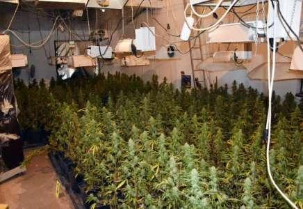 Otkrivena ilegalna laboratorija za uzgoj marihuane