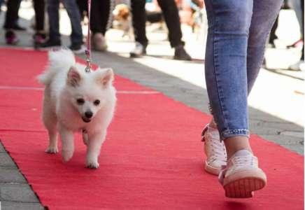 Po prvi put u Pančevu: revijalna izložba pasa i mačaka Royal Vet Pet Happening