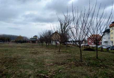 Pančevo: olimpijski i svetski šampioni sadiće drveće s građanima 14. decembra
