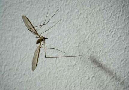 Besplatna podela larvicida za suzbijanje komaraca