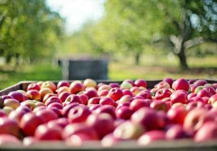 Potencijali za razvoj organske proizvodnje u Srbiji