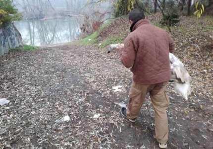 Neobična akcija spašavanja od ranog jutra: zalutali labud vraćen na obale Tamiša