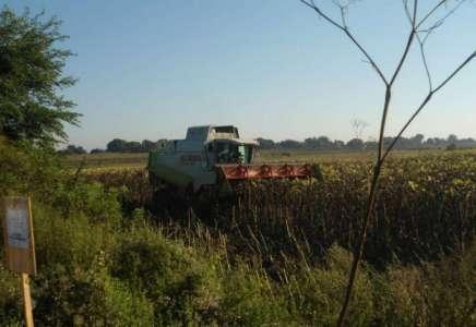Uveden red u izdavanje državnog poljoprivrednog zemljišta u Pančevu