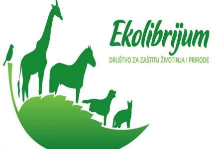 Aktivnosti Društva Ekolibrijum povodom Svetskog dana napuštenih životinja