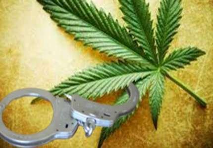 Zaplenjeno osam kilograma marihuane u Pančevu