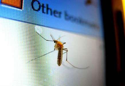 Uskoro će početi suzbijanje komaraca i sistematska deratizacija u Pančevu