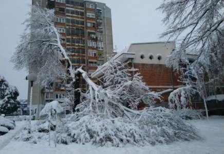 Pančevo: od težine snega lome se grane drveća